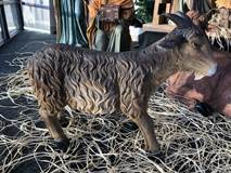 "28"" Heavens Majesty Goat Goat, outdoor nativity, indoor nativity, color nativity, christmas gift, christmas decor, yard decor, church gift, church items, heavens majesty"