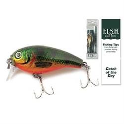 Catch of the Day Lure-Shallow Diver Perch