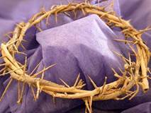 Crown Of Thorns (7-8 inches in diameter)