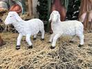 "Heavens Majesty Lamb Set (2) - Pairs with 59"" Set Lambs, outdoor nativity animals, indoor nativity, color nativity, christmas gift, christmas decor, yard decor, church gift, church items,53387"